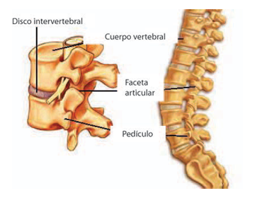La osteocondrosis 1 step